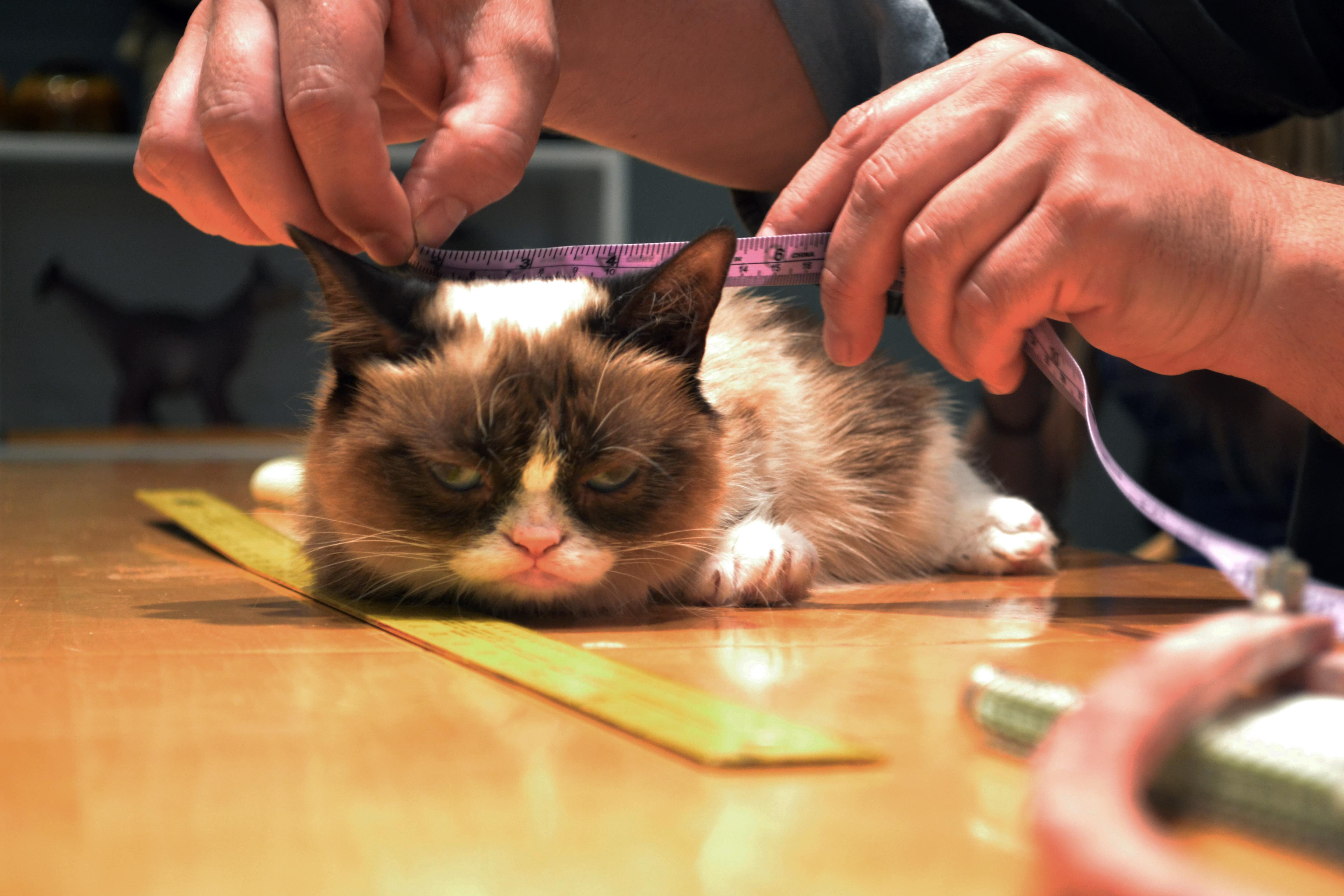 photo of Grump Cat at Jim Henson's Creature Shop