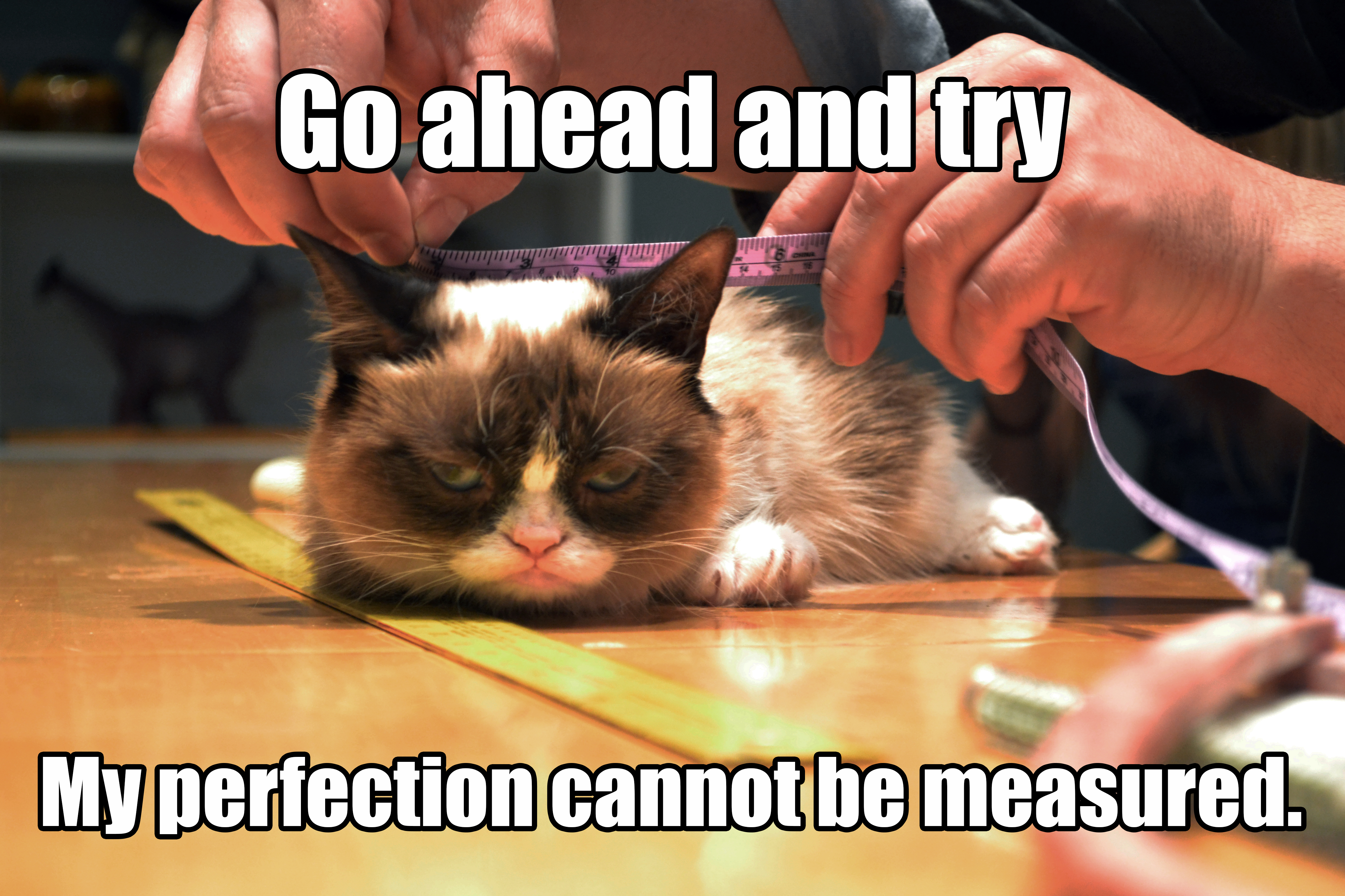 Grump Cat Meme from Jim Henson's Creature Shop
